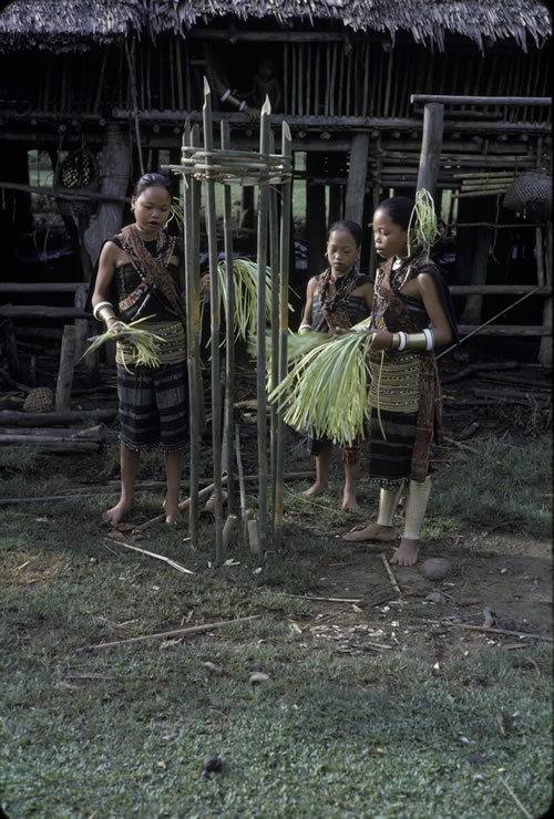 Young Priestesses/Spirit Mediums Chanting over a Pig Sacrifice at an Altar Situated Outside the Longhouse Apartment.